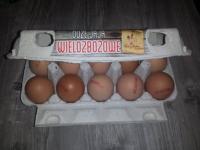 Olas brūnās A klase L izmērs 10gab.
